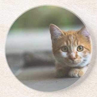 Orange tabby kitten. coaster