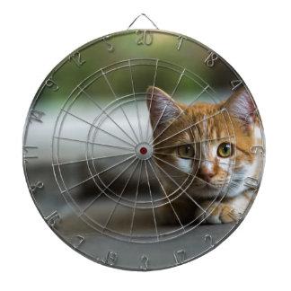 Orange tabby kitten. dartboard