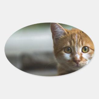 Orange tabby kitten. oval sticker