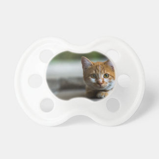 Orange tabby kitten. pacifier