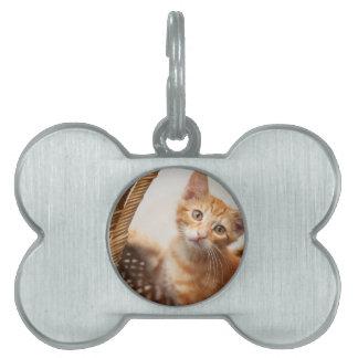 Orange Tabby Kitten Pet Tags