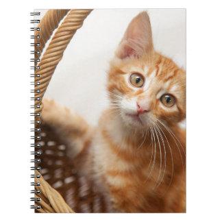 Orange Tabby Kitten Spiral Notebooks