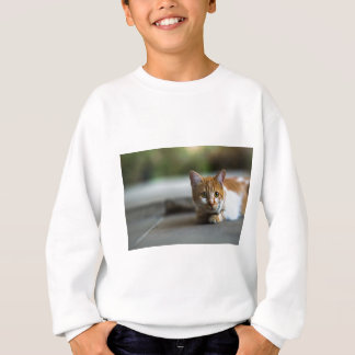 Orange tabby kitten. sweatshirt