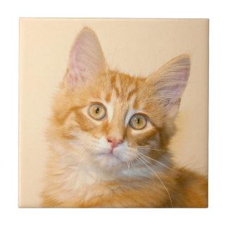 Orange tabby kitten tile