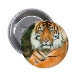 Orange Tiger Button