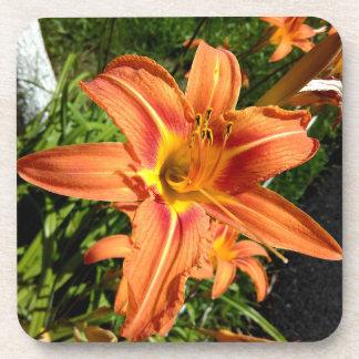 Orange Tiger Lilies Beverage Coaster