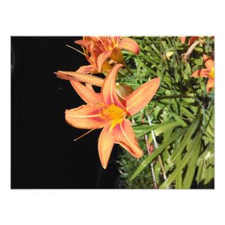 Orange Tiger Lilies Photo Print