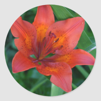 Orange Tiger Lily Classic Round Sticker