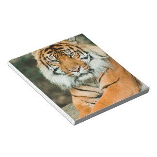 Orange Tiger Notepad