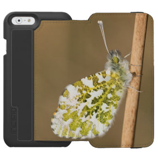 Orange-tip Butterfly Incipio Watson™ iPhone 6 Wallet Case