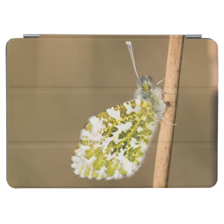 Orange-tip Butterfly iPad Air Cover