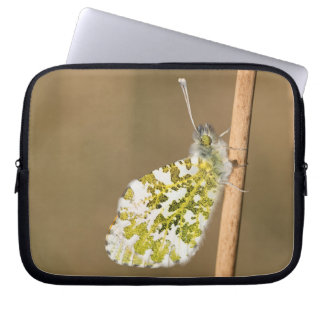 Orange-tip Butterfly Laptop Sleeve