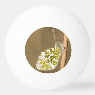 Orange-tip Butterfly Ping Pong Ball