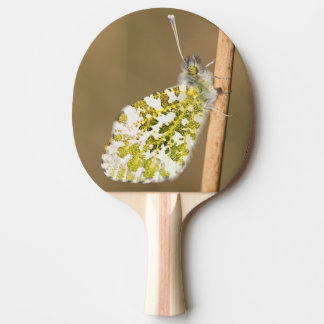 Orange-tip Butterfly Ping Pong Paddle