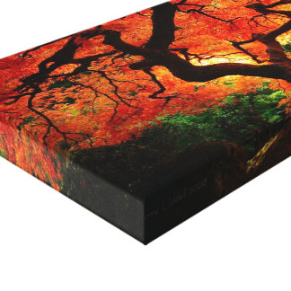 Orange Tree Canvas