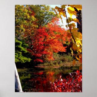 Orange Tree Fall Foliage Photography Poster