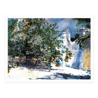 Orange Tree, Nassau by Winslow Homer Postcard