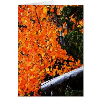 Orange Tree With Log, Blank Inside Card