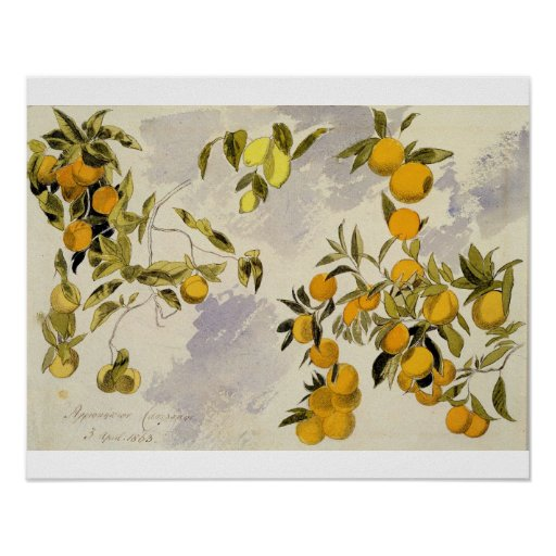 Orange Trees, 1863 (w/c, pen and ink over graphite Poster