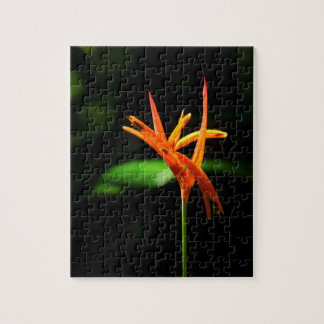 Orange tropical flowers isolated against black bac puzzles