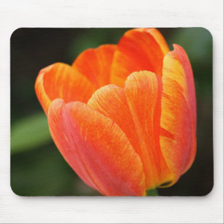 Orange Tulip Mousepad