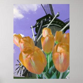 Orange Tulip Windmill Poster Print
