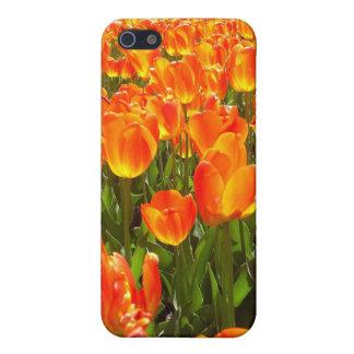 Orange Tulips iPhone 5/5S Cases