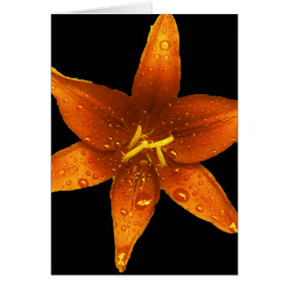 Orange Vibrant Lily Card