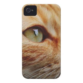 Orange White Cat iPhone 4 Cases