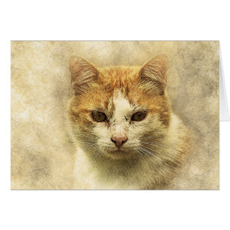 Orange & White Kitty | Abstract | Watercolor Card
