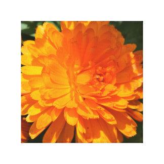 Orange wild flower, stretched canvas print
