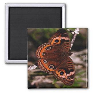 orange-wing butterfly magnet