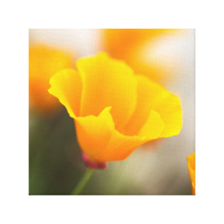 Orange Yellow Flower Canvas Print