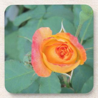 orange yellow rose flower coaster