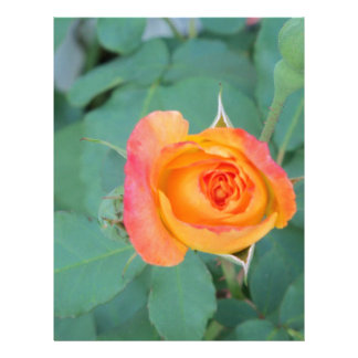 orange yellow rose flower letterhead