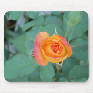 orange yellow rose flower mouse pad