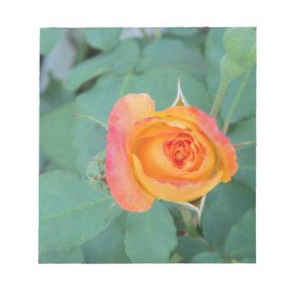 orange yellow rose flower notepad