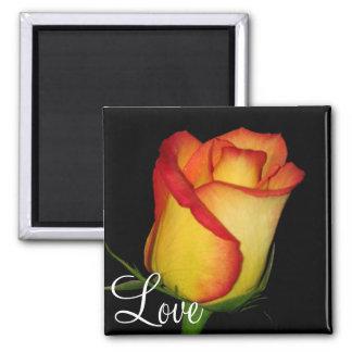 Orange-Yellow  Rose Magnet