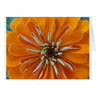 Orange Zinna Macro Card