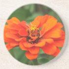 Orange Zinnia Coaster