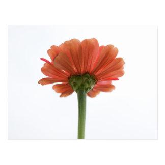 Orange Zinnia Flower Postcard