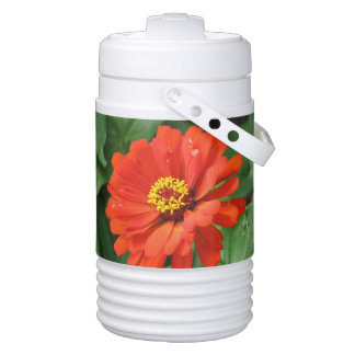 Orange Zinnia Igloo Beverage Cooler