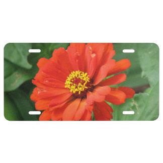Orange Zinnia License Plate