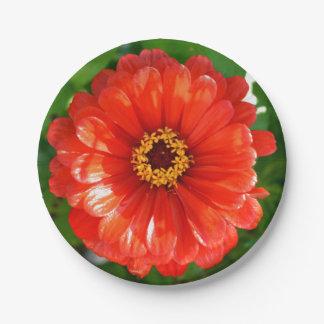 Orange  Zinnia Paper Plate