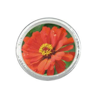 Orange Zinnia Photo Ring