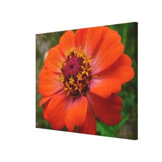 Orange Zinnia Wildflower Nature Photo Canvas Print