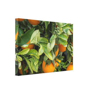 Oranges  on the tree. canvas print