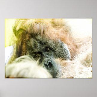 Orangutan 2 poster
