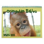 Orangutan Babies Calendars