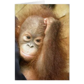 Orangutan Baby Card